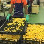 USTAKO achieves HACCP certificate