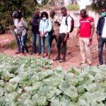 Projet Pépinière de Responsables Techniques : sortie de terrain à Baguida