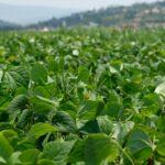 Agriculture bio : le nouveau règlement européen reporté d'un an
