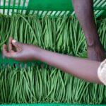 News Digest: Agri-food policy