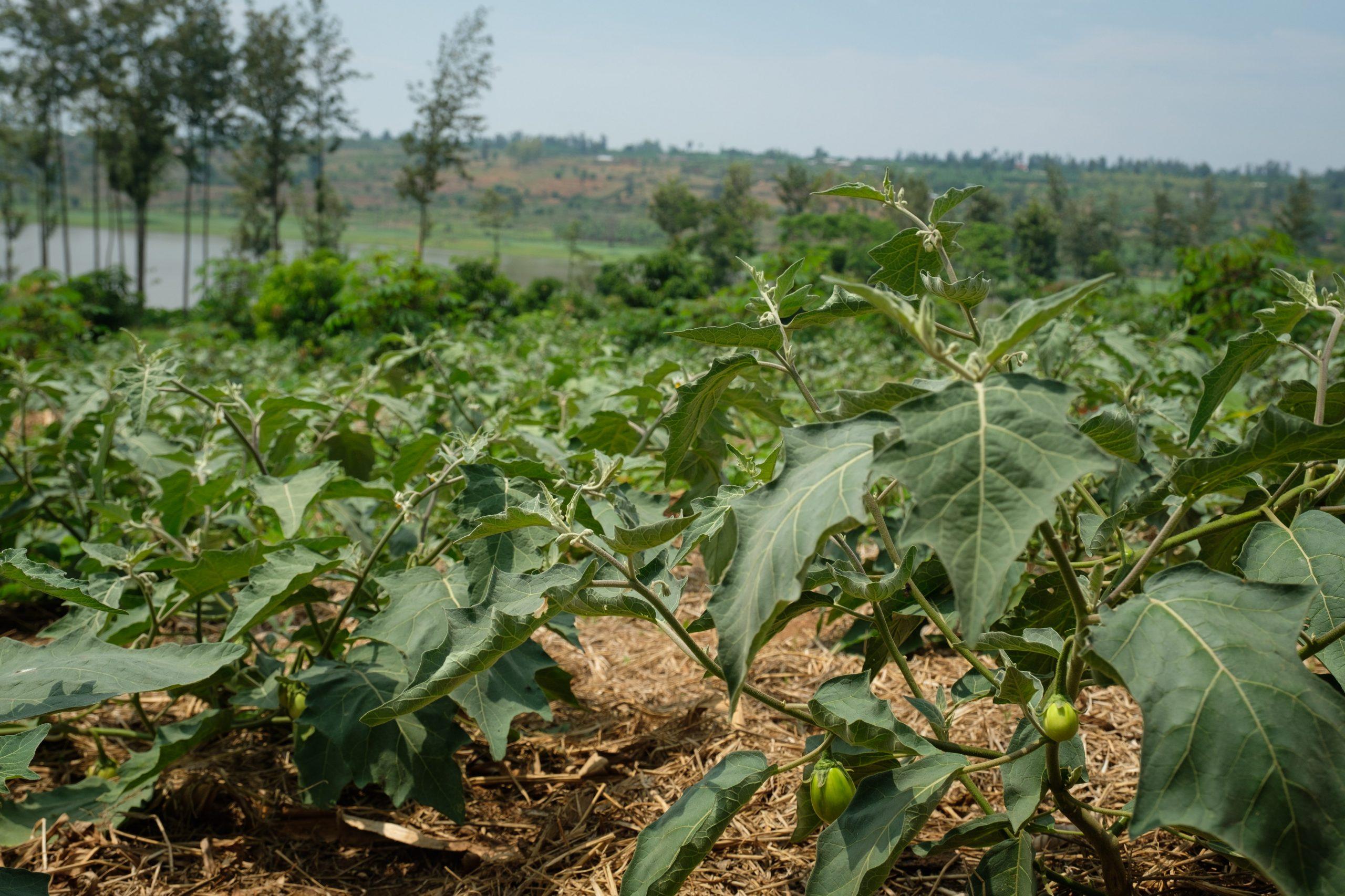 IFOAM Survey on Pesticide Residues