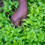 Tanzania: Partnership for horticultural training programme