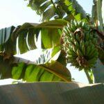 News Digest: Agri-food production