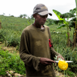 Field activities resume in Côte d'Ivoire