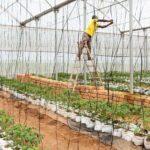 Etude dans la CEMAC sur les procédures d'inspection et de contrôle de l'entrée, de la vente et de l'utilisation des pesticides