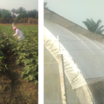 FRESH SALONE (Sierra Leone) - food Safety Management System and Training Needs Assessment