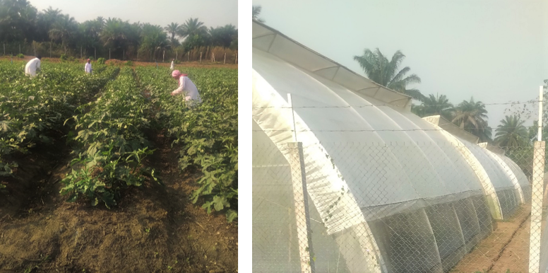 FRESH SALONE (Sierra Leone) - food Safety Management System and Training Needs