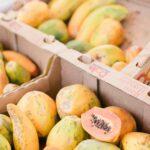 Les contrôles à l'importation des fruits et légumes frais en Europe : L'exemple de la Belgique