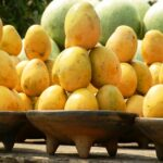 WEST AFRICA: WORKSHOPS FOR THE START OF THE MANGO CAMPAIGN