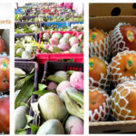 Mali: Mango exporter ETS Yaffa & Frères benefits from a business loan