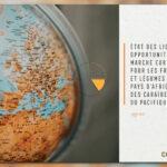 Nouvelle publication – Le marché européen pour les fruits et légumes des pays ACP